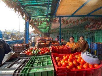 tomato traders at a market