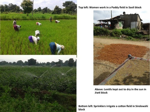 women working in paddy field, lentils drying, sprinklers irrigate cotton field