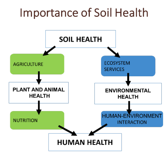 Image conceptually explaining the importance of soil health to human health through two tracks: enhancing agricultural productivity and nutrition, and through its impact on ecosystem services and environmental health
