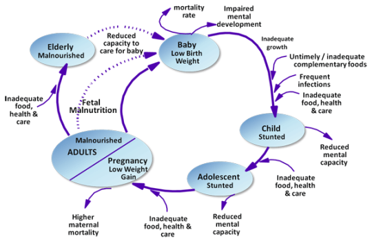 Diagram of nutrition throughout the life cycle